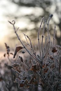 Fog n Frost 08