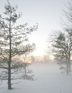 Fog n Frost 12