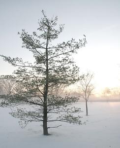 Fog n Frost 07