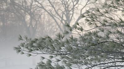 Fog n Frost 02