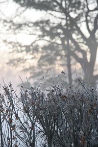 Fog n Frost 14