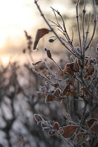 Fog n Frost 09