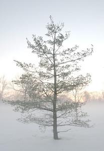 Fog n Frost 03