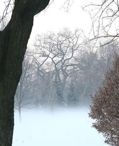 Fog n Frost 04