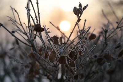 Fog n Frost 01