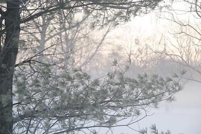 Fog n Frost 06