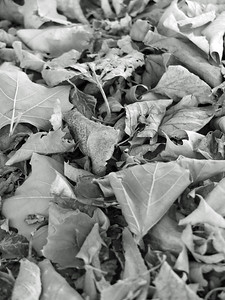 just a pile of leaves by the road, but good texture and contrast, filmed in standard Black and White