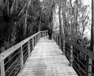 Cypress Stroll