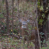 I love sitting in our deer stand out back.  It's so peaceful and relaxing.  And sometimes you see some really neat things.  This was a beautiful 8 point buck that came walking by.  My heart was pounding!