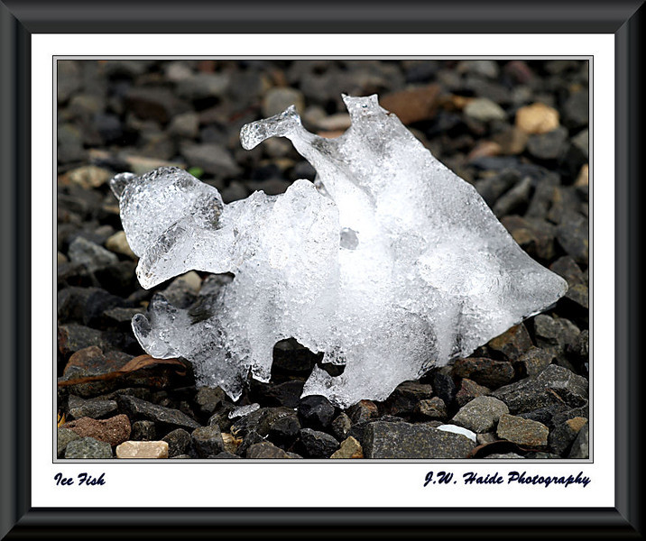 Ice Fish - Natural ice sculpture that appeared in my driveway in Hillsboro, Oregon