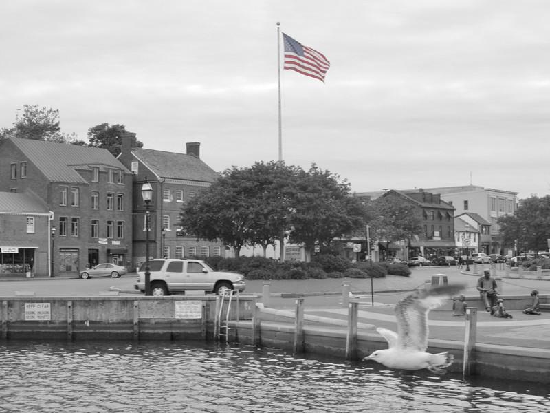 Spring 2012, Annapolis MD Copyright Sue Steinbrook