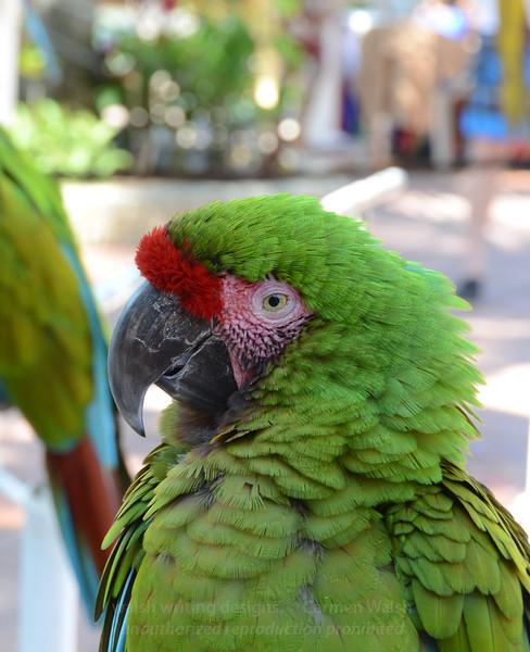 Quizzical Parrot