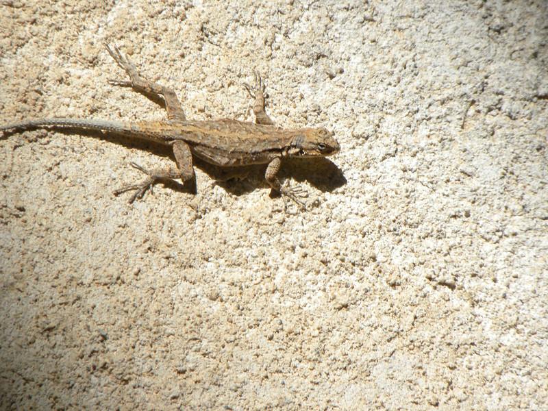 Stucco lizard