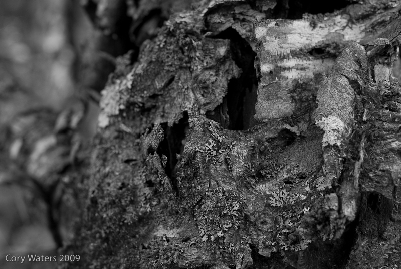 More Texture