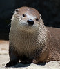 I otter be sharper