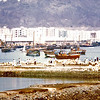South Arabia (the 1960s) - The dhow harbour at Aden. Ma'ala flats visible in background. The mole in the near foreground is the site of the story 'Bugs'.