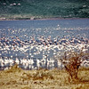 Kenya, Lake Bogoria (1965) - Flamingoes at Lake Bogoria