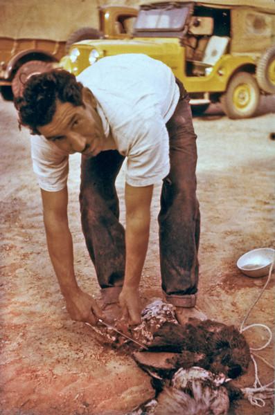 Iran (1959) - Our field cook, Mahmoud Khorsandi, killing a chicken.
