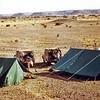 South Arabia (1964) - Camp in the Northern Desert (Sahra al Shumal). Northern Jol in distance.