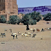 South Arabia (1961) - Goats heading for the wells of Shibam, Wadi Hadhramaut.