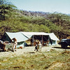 Kenya (1965) - our camp at Lake Bogoria. Tent at left was ours, tent at right was Roger's AKA the dining tent.