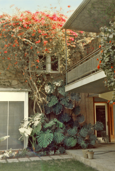 Cairo, Maadi (1981-84) - The front door of 25, Road 5. Note bouganvillia. Master Bedroon balcony at upper right.