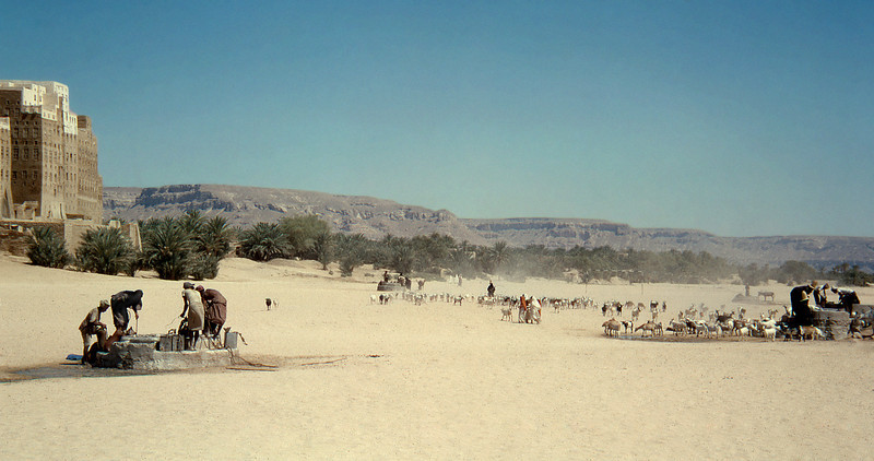 South Arabia (1964) - Flocks at the wells of Shibam. City at far left, walls of Wadi Hadhramaut in far distance.