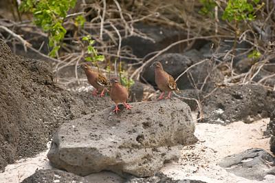 Ecuador, Galapagos Islands