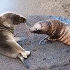 Galapagos Islands : 5 galleries with 267 photos