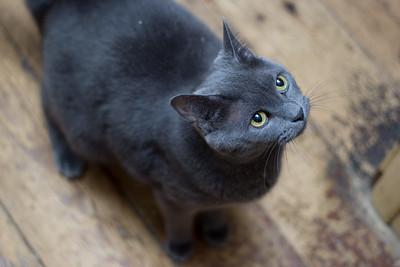 Carina Studios Pet Photography