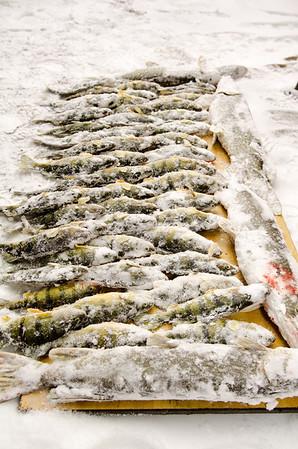 Randy David Ice Fishing 2-2-13  2108