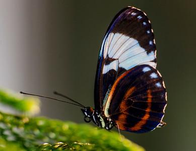 Beauty-Bug