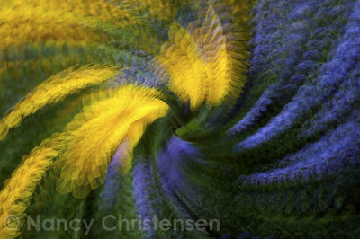 Swirling Black-eyed Susan and Floss Flowers