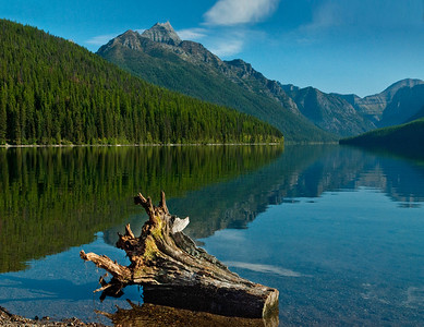 Tree Stump - Bowman Lake