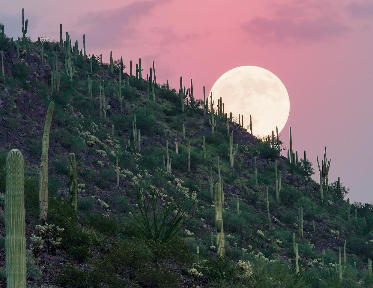 Moon_Rise_Saguaro_NP