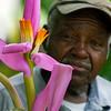 gardener joseph dawson with a banana blossom. 6/13/08