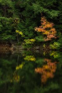 Fall Symmetry
