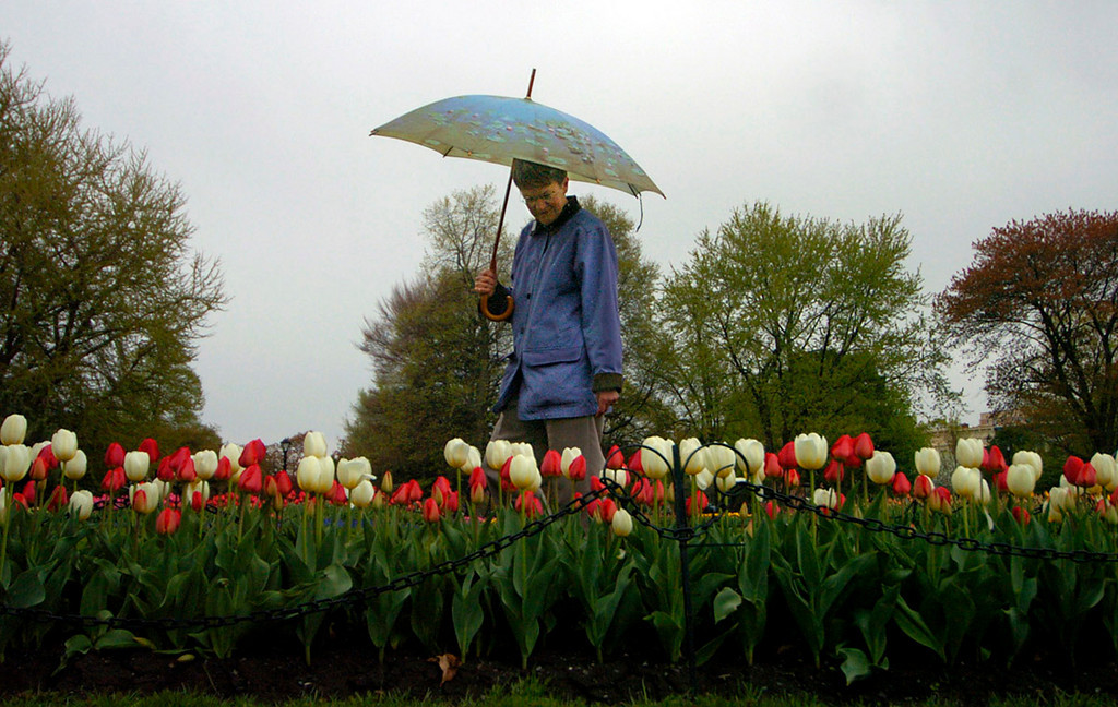 7.94x5.0deep---Ana Zangroniz photo for use in Albany section, to run Wednesday, May 4, 2005. Harriet Seeley of Albany strolls through Washington Park during her lunch hour to admire the crop of tulips in bloom, on Tuesday, May 3, 2005.