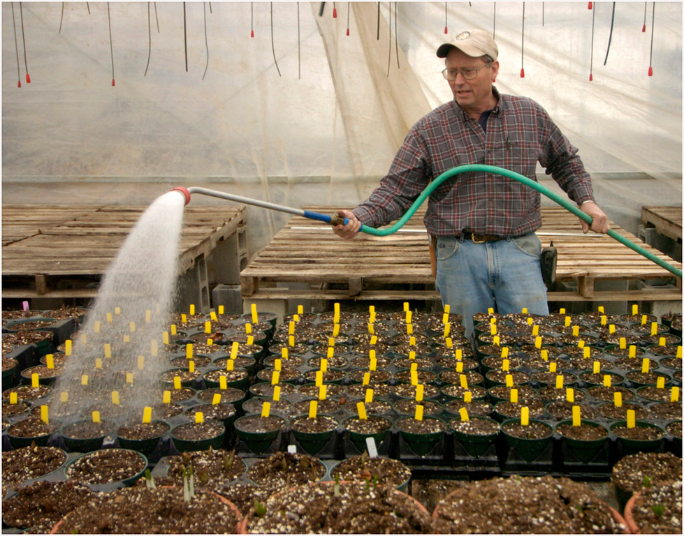 7.94x6.25 deep---Ana Zangroniz photo for an Ed Munger story to run First Edition Tuesday, March 1, 2005. Carrot Barn owner Richard Ball waters an assortment of tulips, mini-daffodils, and hyacinths inside of the greenhouse at Schoharie Valley Farms, on Monday, February 28, 2005. The farm opens for the season on Tuesday, March 1.