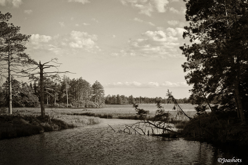 Seen Wildlife Preserve, MI 2011