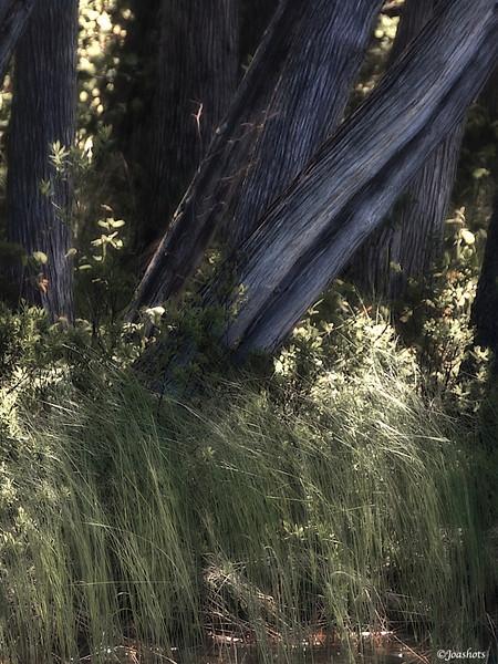 Grayling 2008