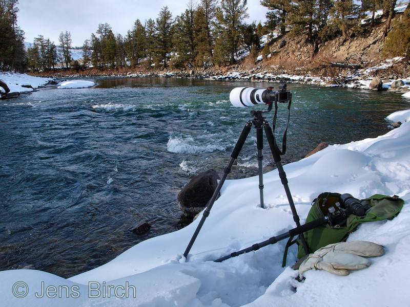 Olympus E-P2 with EVF mounted on the ZD 300/2.8+ ZD EC-20 teleconverter by Yellowstone River. The white neoprene coat for the lens is home made. The tripod is a Feisol CT-3472LVL modified so that the legs can be completely splayed with retained levelling capability. Any center column remains were eliminated and a bubble level was added in the modification. The Gimbal is a Jobu Jr. I modified so that the lens sits centered over the tripod hub.