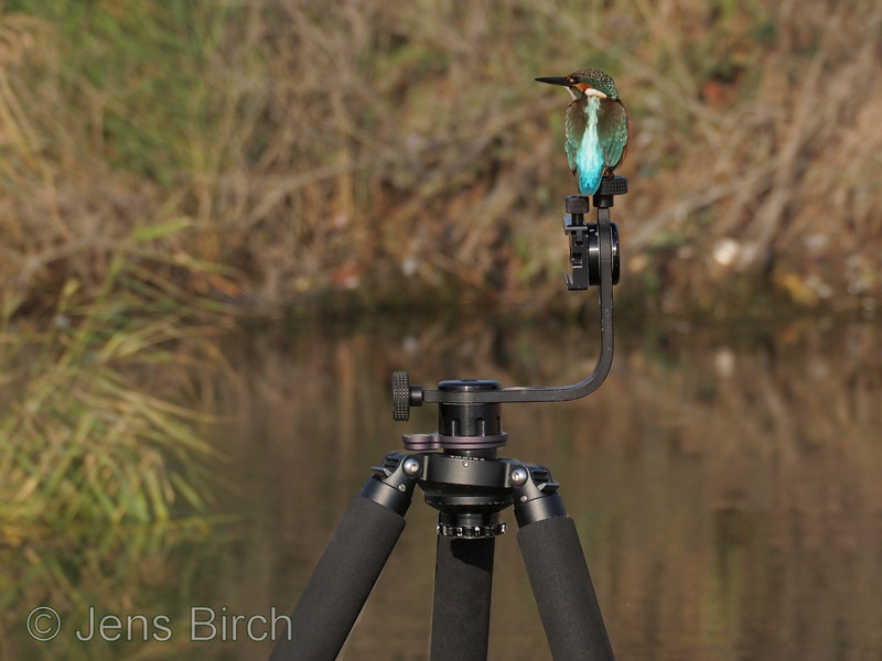 Kingfisher (<i>Alcedo atthis</i>) (Kungsfiskare) using my tripod as a perch in Hadzhiyska River (Sunny Beach), Bulgaria 2011.