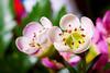 Flower Macro_MG_6867