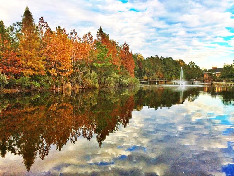 Reflections in South Carolina
