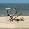 Driftwood on Pelican Spit 6/06