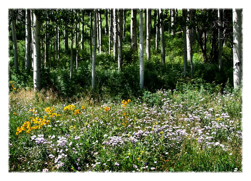 Summer Wild Flowers<br /> San Juan Mountains, Colorado