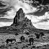Navajo Mountain Wild Horses