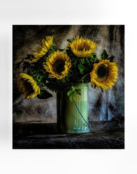Sun Flower Still Life