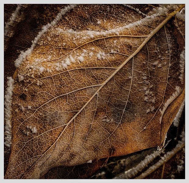 Winters' Leaf